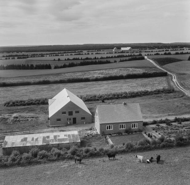36. Vind, 1962. Nørhedevej 15, 'Vestervang'.