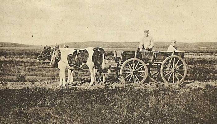 Den jyske hede -uden præcis stedangivelse. Postkortmotiv fra begyndelsen af 1900-tallet.