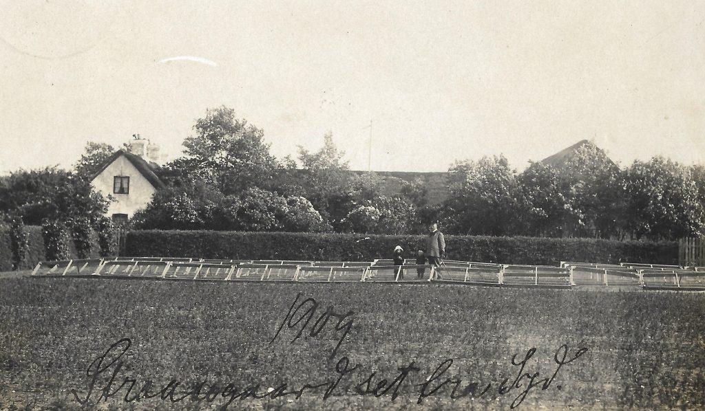 Plantør Tang fotograferet ved Stråsøgård i 1909.