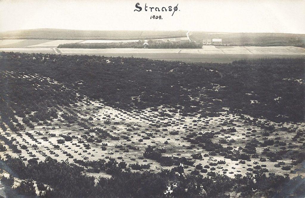 Sandbanker i Stråsø i 1909. I baggrunden midt i billedet, delvist dækket af træer, anes Stråsøgård. I baggrunden til højre ses Stråsø Skole med tilhørende lærerbolig.